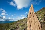 Termite mound overlooking the coast.  Thursday Island, Torres Strait Islands, Queensland, Australia