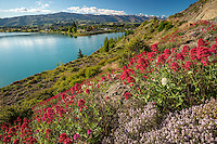 Spring Wildflowers, Lake Dunstan, Cromwell, New Zealand - stock photo, canvas, fine art print