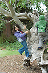 Berkeley CA Children, four and five, delighted with gnarled old buckeye tree for climbing