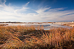 Autumn colors the beach grasses at Paines Creek Beach in Brewster, Cape Cod, MA, USA