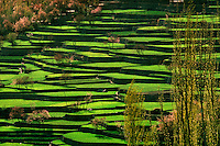 Aerial view of the patterned expanse of terraced rice fields, Hunza, Pakistan.
