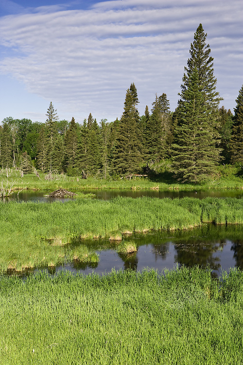 Beaver pond in Riding Mountain National Park