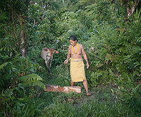 Abai Lau Lau with her cow. Although famous for its hunting tradition, nowadays the Mentawai also start to breed their own animal. They usually will sell it later for money. The Mentawai are the tribes living traditionally in the island of Siberut, Indonesia. Here, where the changes came slow, some of the people are still living like their ancestors did centuries ago. They s till practice ancient religion called Arat Sabulungan, which believe that everything in the forest has a spirit.