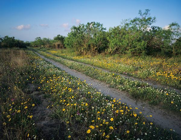 Farm road with wildflowers, Raymondville, Rio Grande Valley,Texas, USA