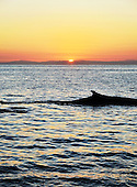 Stock photo sunset whale