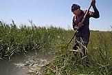 Kanäle im Reisfeld