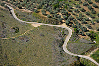 Winding rural road running through olive trees, Ronda, Spain.