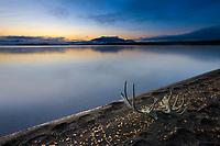 Moose antlers along the shores of Naknek lake at dawn, Kejulik mountains in the distance, Katmai National Park, Alaska.