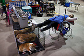 Jay Kim, of Anderson, S.C., takes a nap on his dog-grooming table during the last day. Kennel Club Dog Show, Championship Purebred AKC, Graham Building, N.C. State Fairgrounds. Sunday, March 25, 2012.