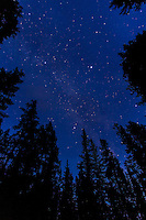 The Summer Triangle and summer Milky Way through trees, taken Sept. 8, 2012 from the Howse Pass overlook at Saskatchewan River Crossing. Taken in deep twilight. Taken with the Canon 7D camera at ISO 800, and Canon 10-22mm lens at f/3.5 for 60 seconds. No tracking, Moon not up.