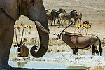 Watering hole, Ongava Reserve, Namibia