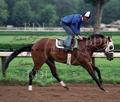 Champion Sacahuista is also the dam of millionaire Ekraar, and Buckstrider and Hussonet.<br /> <br /> In 1986 at Saratoga Race Course