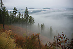 Idaho, North, Coeur d'Alene. Mist hangs in the valleys of the Coeur d'Alene Mountains after a morning rain.