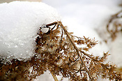 Snow melting on plants.
