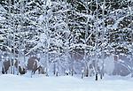 Horses, Methow Valley, Washington