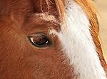Horse eyelashes, Loveland, Colorado
