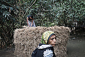 A young man from the Chowduli class is seen piling up the hay while a an old woman looks on in Chaymalpur village of North 24 Parganas in West Bengal, India. Photo: Sanjit Das/Panos for The Wall Street Journal. Slug: ICASTE