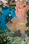 Bligh Waters, Vatu I Ra Passage, Fiji; a scuba diver hovering inside an opening in the reef, flanked by orange and pink gorgonian sea fans and dark green, Black Sun Corals