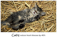 Cats reduce heart disease by 40%