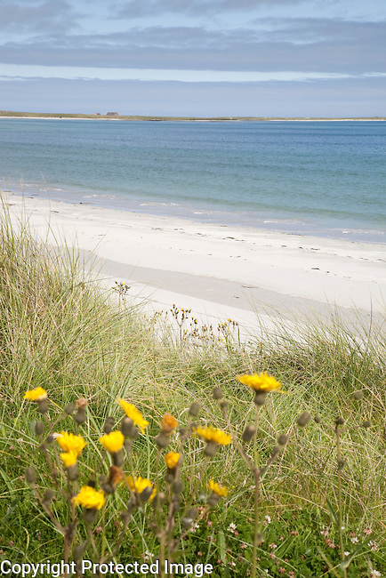 Bay of Lopness Beach, Sanday, Orkney Islands, Scotland
