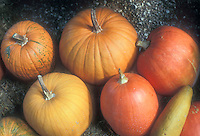 Pumpkin types showing variety of colors from yellow to orange to red