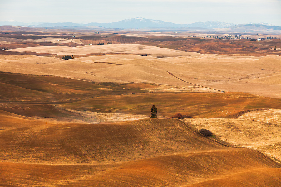 The warm afternoon sun lights the hills of the Palouse, seen from Steptoe Butte in Eastern Washington.