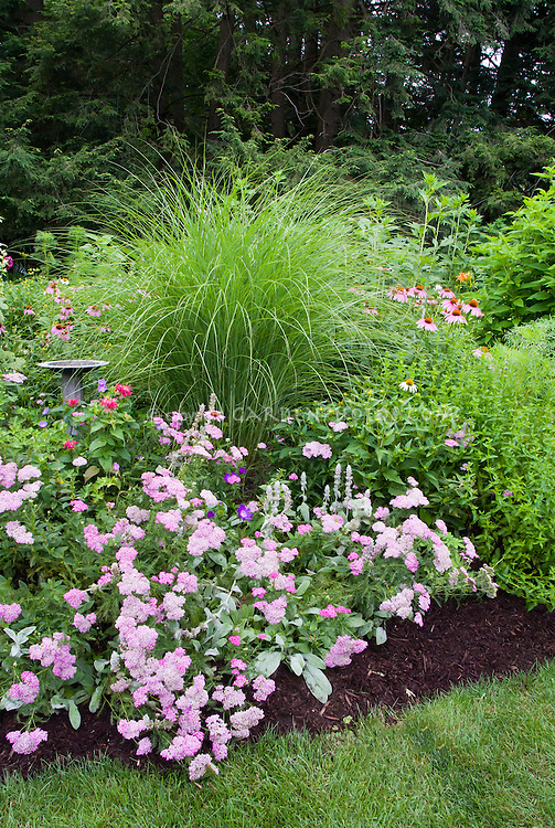 Backyard perennial bed plant flower stock photography for Grasses for flower beds