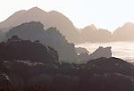 Coast landscape, Pt. Lobos State Reserve, California, USA