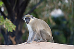 Travel Pictures from Gambia 2011