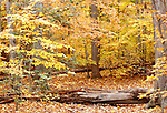 Yellow Autumn leaves, A beautiful time with the foliage fall color season which can reveal an abundance of brilliant bright colors in Virginia, Wonders of fall leaves in Virginia, Fine Art Photography by Ron Bennett, Fine Art, Fine Art photography, Art Photography, Copyright RonBennettPhotography.com ©