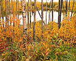 Northern Alberta...Copyright Garth Lenz. Contact: lenz@islandnet.com www.garthlenz.com