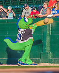 20 August 2015: Vermont Lake Monsters Mascot Champ entertains fans with a ball and bat prior to a game against the Tri-City ValleyCats at Centennial Field in Burlington, Vermont. The Stedler Division-leading ValleyCats defeated the Lake Monsters 5-2 in NY Penn League action. Mandatory Credit: Ed Wolfstein Photo *** RAW Image File Available ****