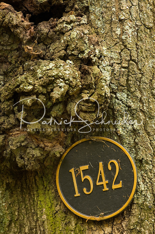 Close up photo of a house number that is affixed to an oak tree in the Myers Park neighborhood in Charlotte, NC. Myers Park is one of the premier neighborhoods in North America and known for its large canopy of trees.