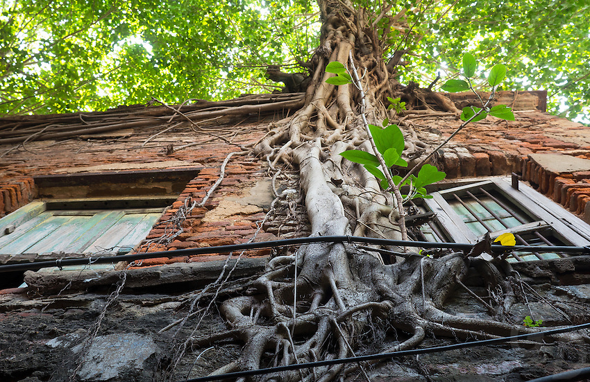 Nature takes over in some streets of Kolkata, roots and veins crawling up a Brick Building complex. West Bengal, India