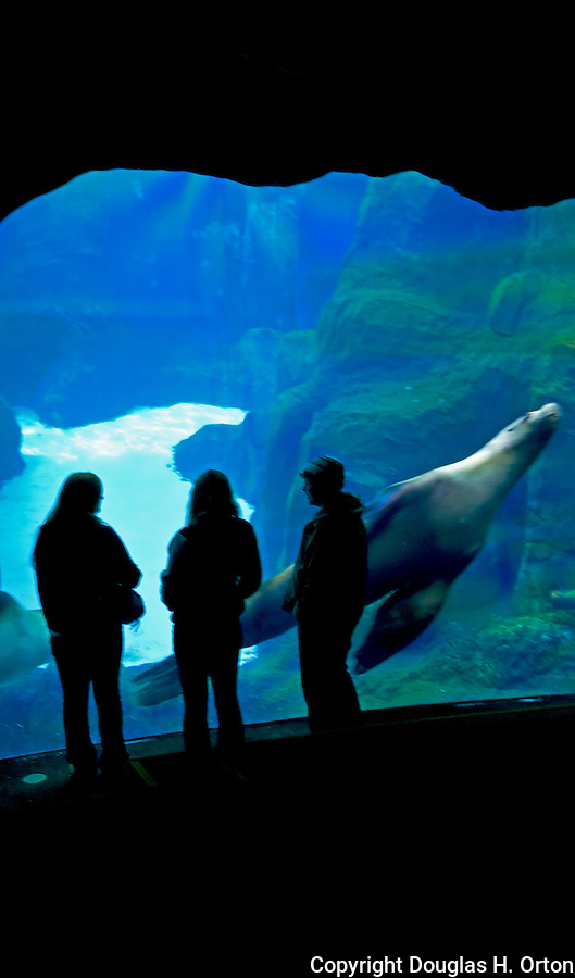 Visitor 39 S To The Portland Zoo Watch Sea Lions From The
