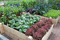 Raised Bed Vegetable Garden in Backyard