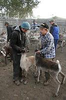 Nils-Aksel Bransfjell t.h. og Simon Danielsen er de to yngste med egen driftsenhet i Saanti sijte, sørsamisk reindrift.