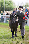 Shetland Pony Classes at the Great Yorkshire Show 2010