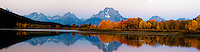 Autumn Sunrise at Oxbow Bend in Grand Teton National Park. A rose colored sky accents the yellow aspen along the banks of the Snake River that hosts a reflection of the Grand Teton Mountains above.