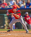 7 March 2013: Washington Nationals infielder Will Rhymes lays down a bunt during a Spring Training game against the Houston Astros at Osceola County Stadium in Kissimmee, Florida. The Astros defeated the Nationals 4-2 in Grapefruit League play. Mandatory Credit: Ed Wolfstein Photo *** RAW (NEF) Image File Available ***