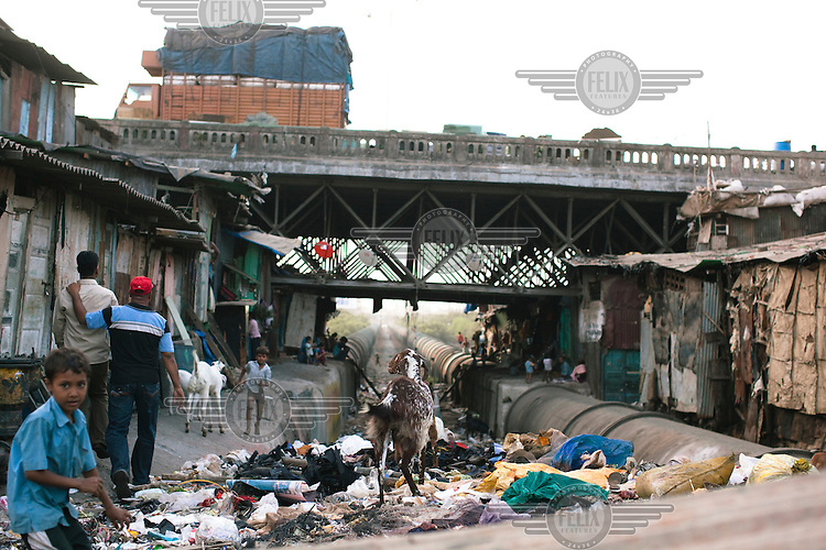 Goats picking through rubbish left outside homes in Dharavi slum.
