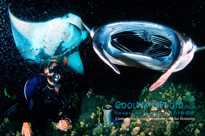 woman scuba diver and reef manta rays or coastal mantas, Manta alfredi, feeding at night, Kona Coast, Big Island, Hawaii, USA, Pacific Ocean
