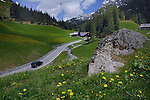 Meadows spring flowers and alpine peaks and forest. Bschlabs, Hahntennjoch pass, Imst district, Tyrol, Tirol, Austria.