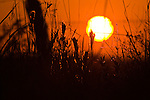 Sunset over the Katy Prairie, silhouetting brushy bluestem grass, in autumn, West Harris County, near Houston, Texas,  tall grass prairie.