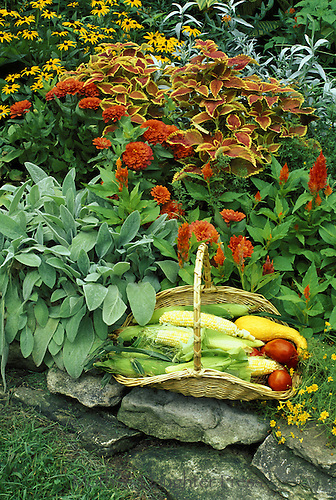 Orange garden flowers with fresh harvested vegetables on rock wall