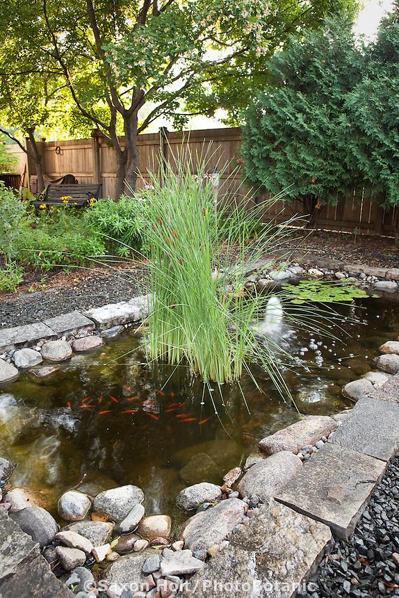 Rectangular pond with cattails (Typha latifolia) and gravel path in shady backyard habitat garden