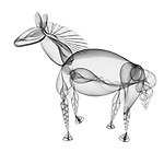 X-ray image of a horse (black on white) by Jim Wehtje, specialist in x-ray art and design images.