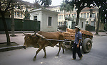 A water buffalo hauls a load of bricks along one of the streets in Hanoi, North Vietnam.  (Jim Bryant Photo).....