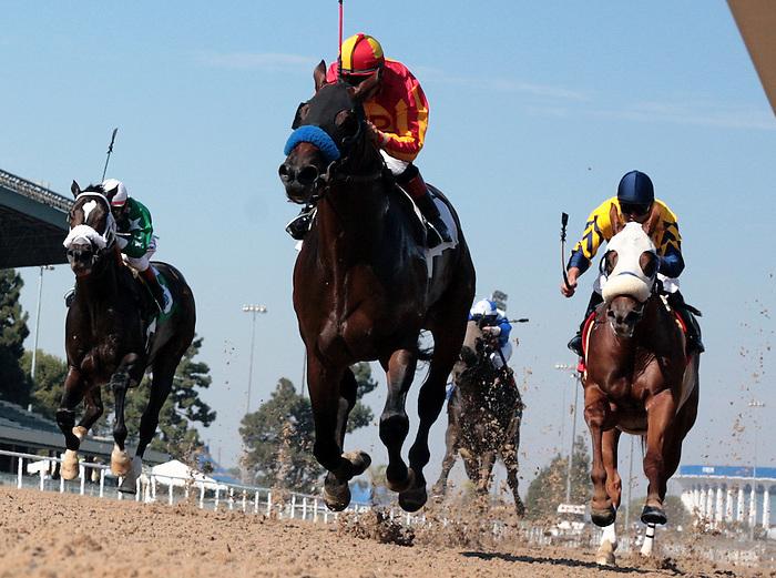 02 November 2006: Hollywood Park Race Track.Photographer: Juliann Tallino.<br />