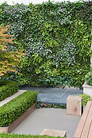 Innovative idea of planting groundcover plants sideways up a living wall of ferns, Lamium maculatum, Ajuga reptans, Tiarella, Fragaria, with boxwood shrubs trimmed in raised beds, Japanese maple Acer palmatum tree,